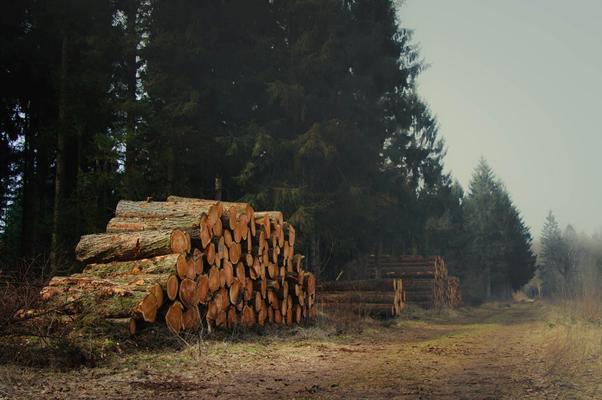 Miško kaina